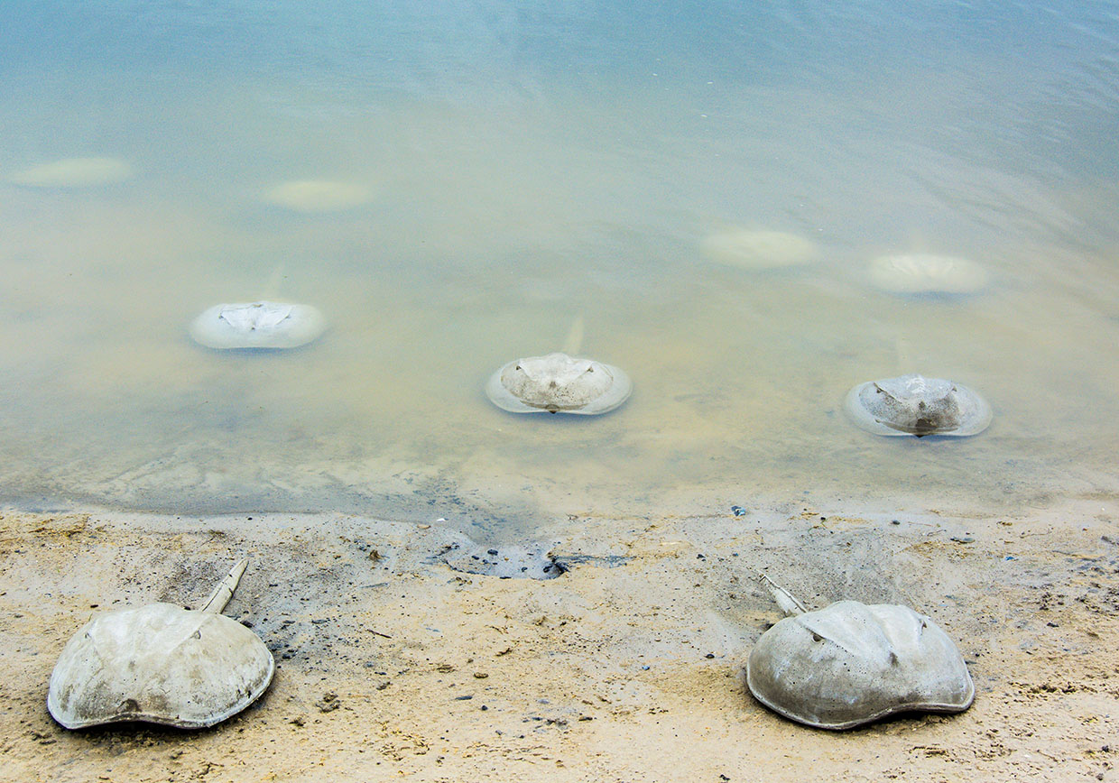 Tue Greenfort, Limulus Polyphemus – A Living Fossil, 2017. ARKEN Museum for Moderne Kunst. Foto: Tina Agnew